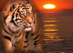 Wallpapers Digital Art Royal Tiger