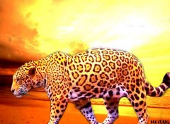 Wallpapers Digital Art Africa