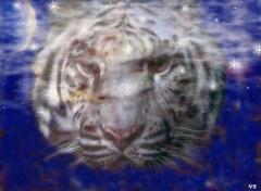 Fonds d'écran Art - Numérique tigre blanc