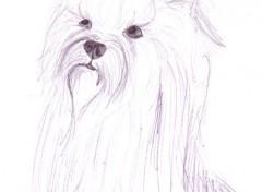 Wallpapers Art - Pencil Une petite chienne!