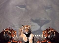 Fonds d'écran Animaux lions