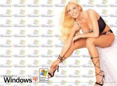 Fonds d'écran Informatique Windows XP Simple