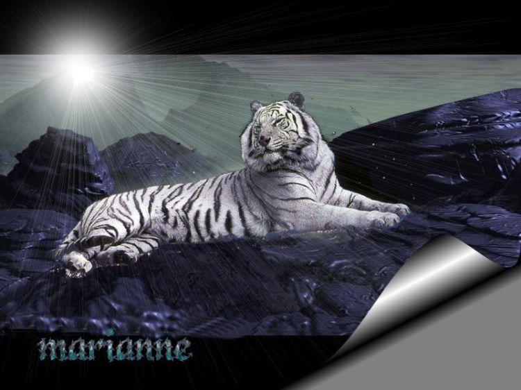 Fonds d'écran Animaux Félins - Tigres Wallpaper N°9520