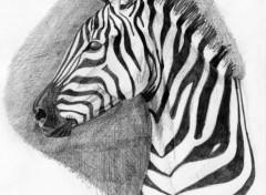 Wallpapers Art - Pencil Drole de Zebre