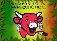 Wallpapers Humor La vache ki rit