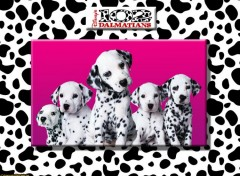 Wallpapers Movies Team Dalmatiens 'Cybersonic'