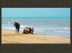 Wallpapers Trips : Africa DROMADAIRE PLAGE