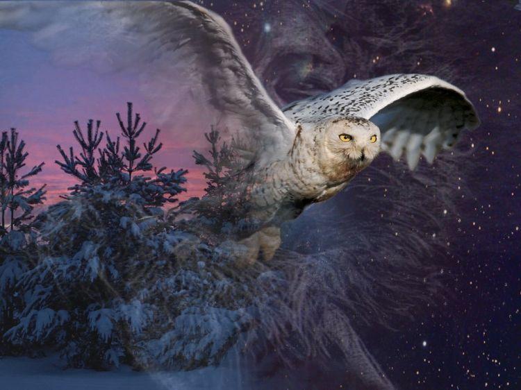 Fonds d 39 cran animaux fonds d 39 cran oiseaux hiboux et for Image pour arriere plan de bureau