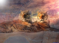 Wallpapers Animals Les Tigres !!!!