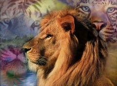 Wallpapers Animals Lions & Tigres
