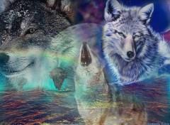 Fonds d'écran Art - Numérique Les Loups !!! 2