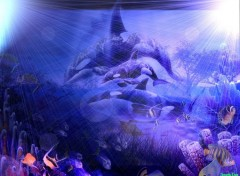 Fonds d'écran Animaux Orque