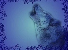 Wallpapers Animals Loup