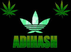 Wallpapers Humor ADIHASH