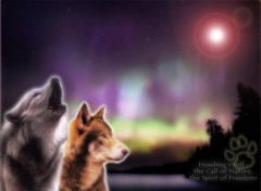 Wallpapers Animals wolves