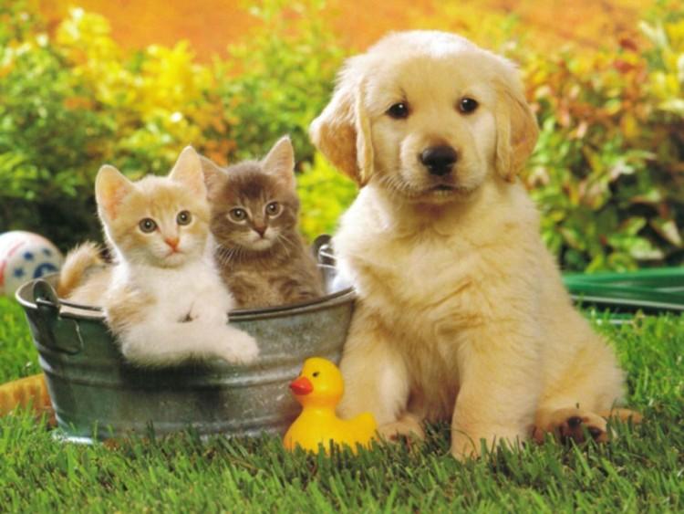 Fonds d 39 cran animaux fonds d 39 cran chats chatons for Fond ecran chiot