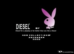 Wallpapers Humor Diesel & Playboy