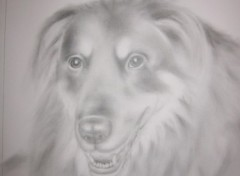 Wallpapers Art - Pencil Chien