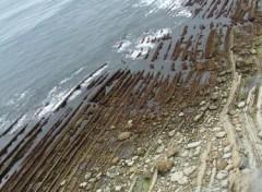 Fonds d'écran Nature lames de rasoir, sous l'océan