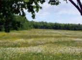Fonds d'écran Nature fleur des champs
