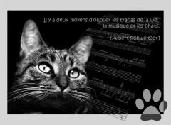 Fonds d'écran Animaux les chats et la musique.
