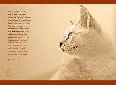 Wallpapers Animals le chat de Beaudelaire