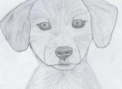 Fonds d'écran Art - Crayon Tête de chien