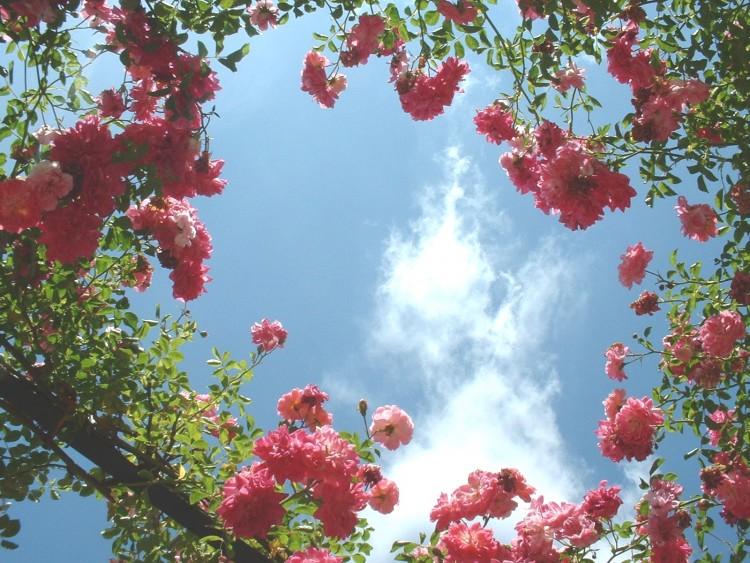 fond ecran fleurs swag