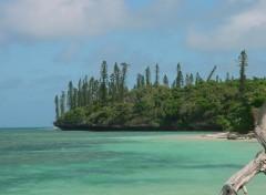 Wallpapers Trips : Oceania Sur l'île des Pins