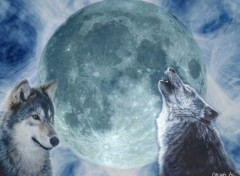 Wallpapers Animals Les loups