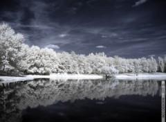 Fonds d'écran Nature Hivernal