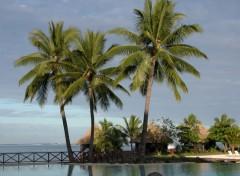 Fonds d'écran Nature Tahiti