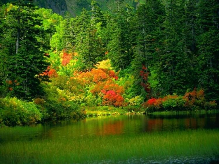 Fonds d'écran Nature Saisons - Automne Wallpaper N°113875