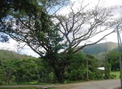 Fonds d'écran Voyages : Océanie Un peu d'ombre à Sarraméa