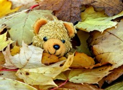 Wallpapers Objects Petit Ours d'automne...