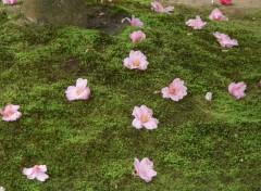 Fonds d'écran Voyages : Asie Fleurs