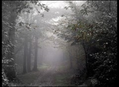 Fonds d'écran Nature Matin brumeux