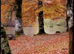 Fonds d'écran Nature Sous la pluie...