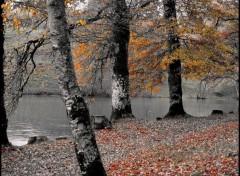 Fonds d'écran Nature Sous la pluie (3)...
