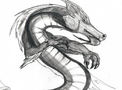 Wallpapers Art - Pencil Dragon