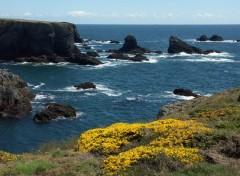 Fonds d'écran Voyages : Europe Belle_Ile fleurie en mai