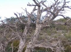 Fonds d'écran Nature Nature morte