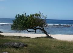 Fonds d'écran Voyages : Amérique du nord La Guadeloupe