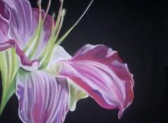 Wallpapers Art - Pencil Lys