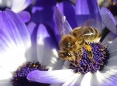 Fonds d'�cran Animaux abeille