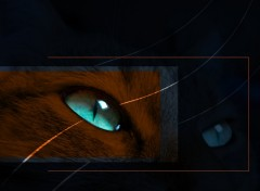 Fonds d'écran Animaux blue eye