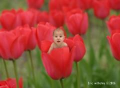 Fonds d'écran Hommes - Evênements bébé tulipe