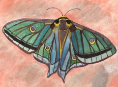 Wallpapers Art - Painting papillon