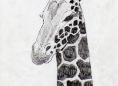 Wallpapers Art - Pencil girafe