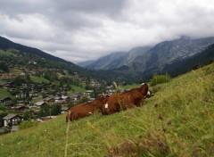 Fonds d'écran Nature la vallée des confins